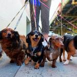 Dog walking startup